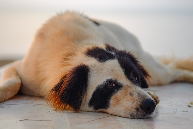 Lazy dog lying down on the floor.