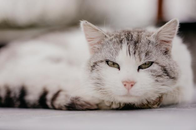 Ленивый кот лежит снаружи. домашняя кошка проявляет лень. очаровательные милые животные расслабляются.