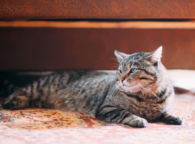 Ленивый полосатый домашний кот отдыхает на красочном ковре дома.