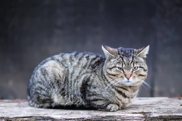 Ленивый полосатый домашний кот расслабляющий на деревянной скамейке на открытом воздухе.
