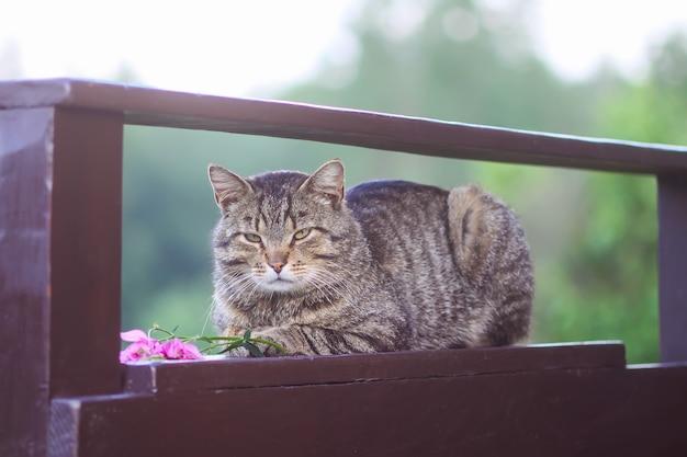 Ленивый полосатый домашний кот расслабляющий на деревянных перилах на открытом воздухе.