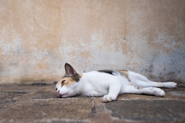 Lazy young cat lying on the ground and looking aside.