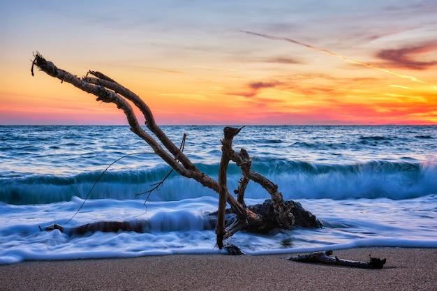 美しい夕日のビーチで水に引っ掛かるld木のトランク