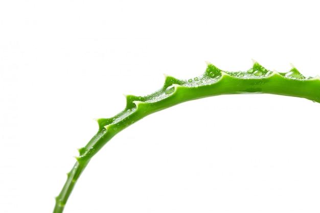 Leaf aloe vera isolated