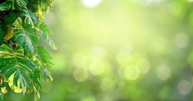 葉の背景のボケ味は緑の背景をぼかし