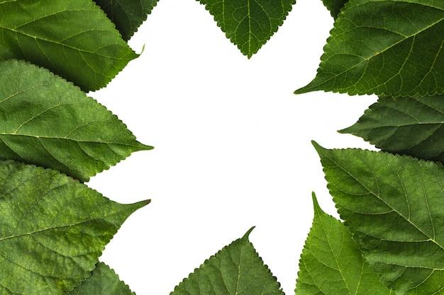白で隔離される葉の背景