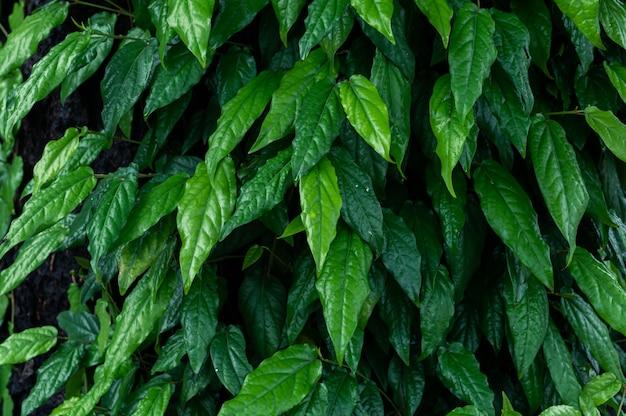 Leaf background ivy green