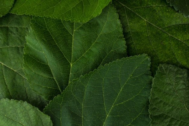 Leaf background texture closeup plant