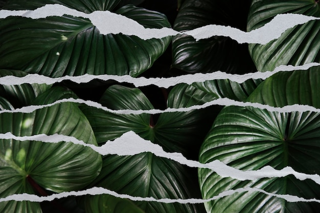 Leaf background with ripped paper