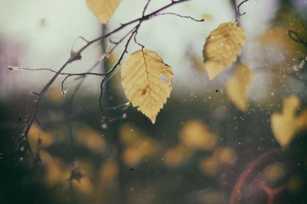 Leaf on branch close up