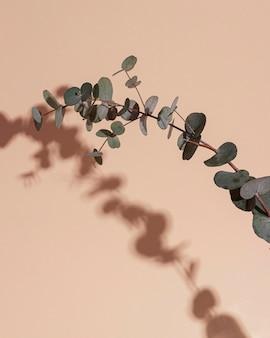 影の葉の枝