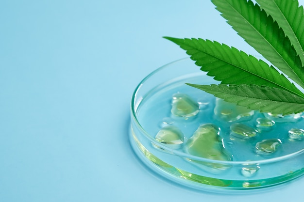 Leaf of cannabis and petri dish with drops of hemp oil and beaker