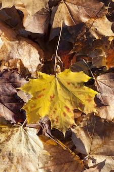 秋に葉が落ちる