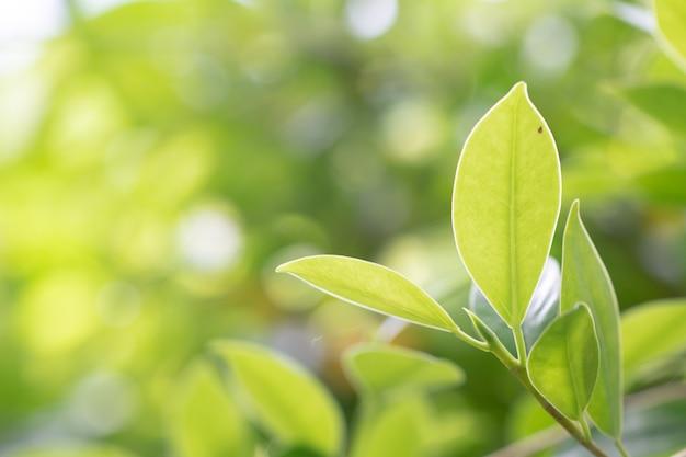 葉緑の自然の木