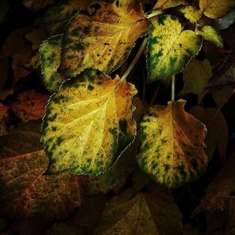 Leaf oak color journal autumn