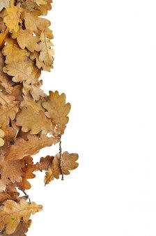 Leaf od oak arranged