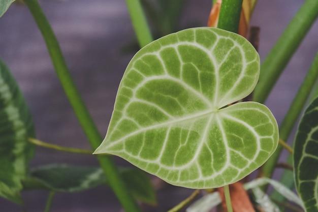 Лист комнатного растения крупным планом