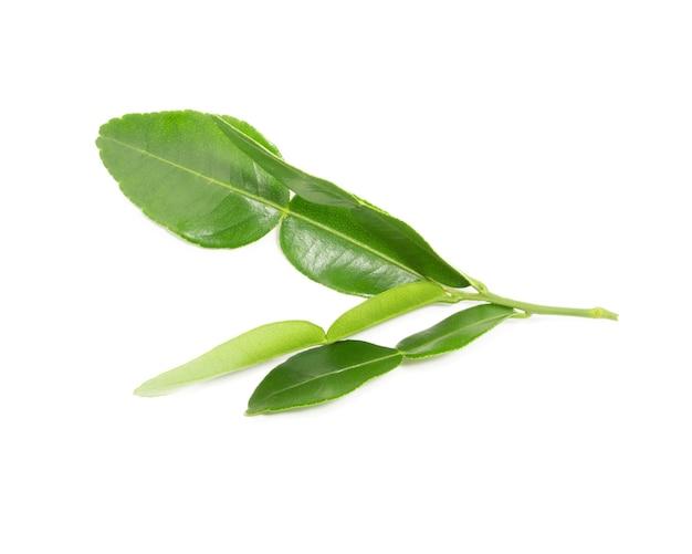 白い背景で隔離のベルガモットの葉