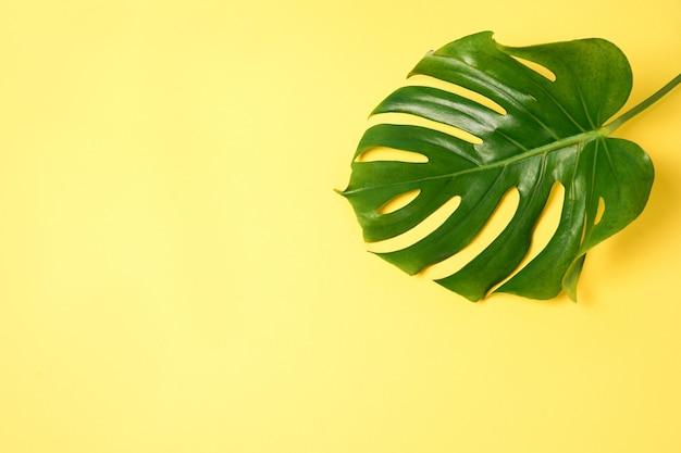 コピー スペースと黄色の背景に緑のモンステラ植物の葉。