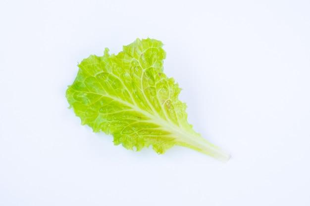 白い背景の上のレタスの葉。白い背景の上の新鮮な緑のサラダ。 Premium写真