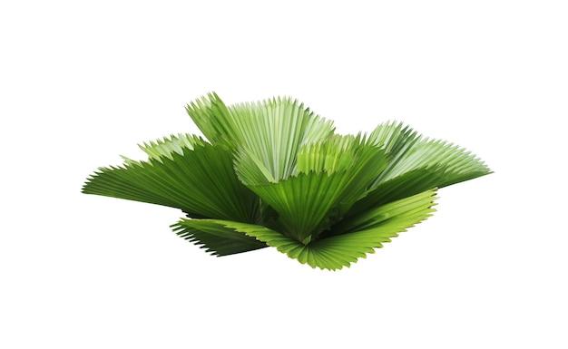흰색 background.clipping 경로에 고립 된 야자수의 잎