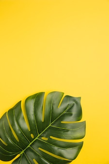 Leaf of palm tree on orange background