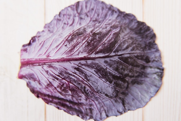 Leaf of red cabbage, minimalist style.