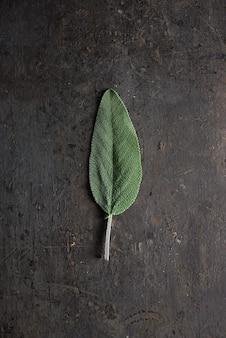 Leaf of sage.