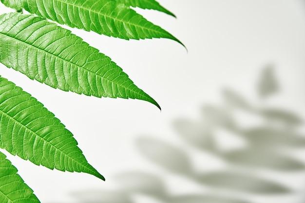 잎 그림자와 흰색 바탕에 녹색 식물입니다. 크리 에이 티브 추상적 인 배경입니다. 자연 그림자 패턴