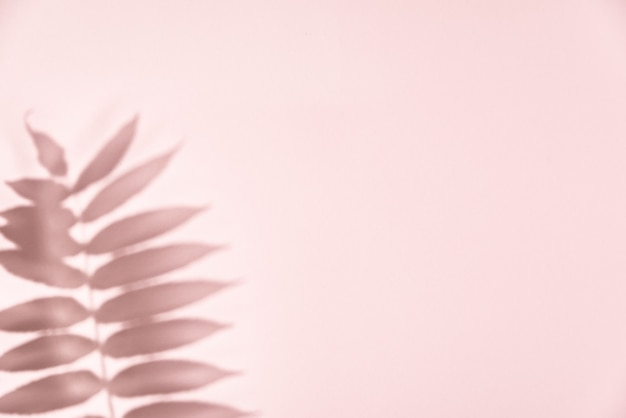 Leaf shadow on pink background. creative abstract background. nature shadow pattern