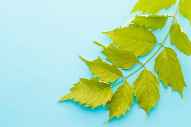 Leaf sprig on a blue