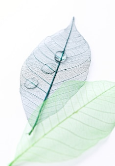 Leaf on the table