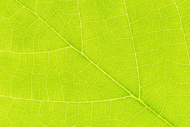 잎 질감 배경입니다. 자연적으로 발생하는 잎 모티프.