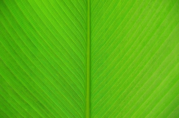 葉のテクスチャー