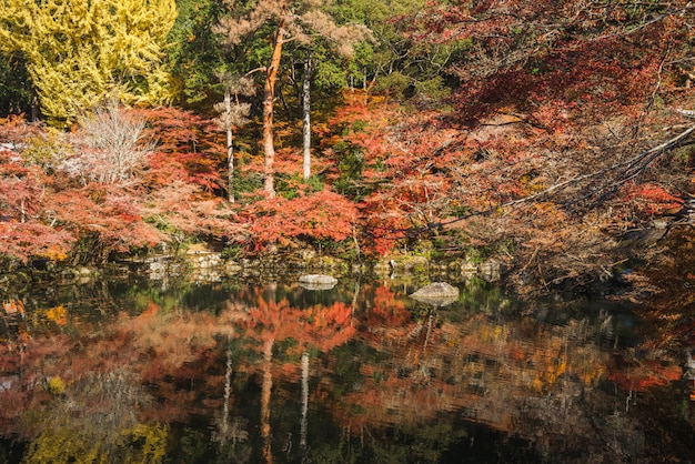 Leaf and tree in autum season at japan