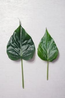 Leaf on vintage background