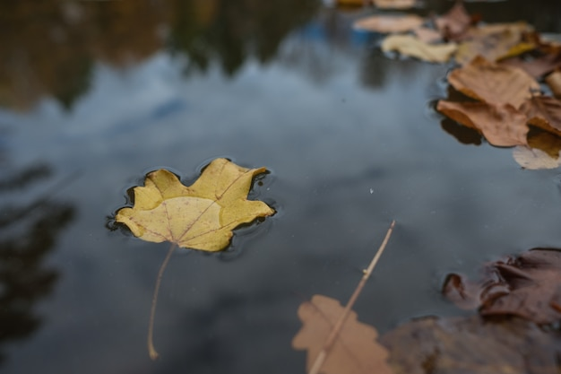 The leaf in water in fall lake