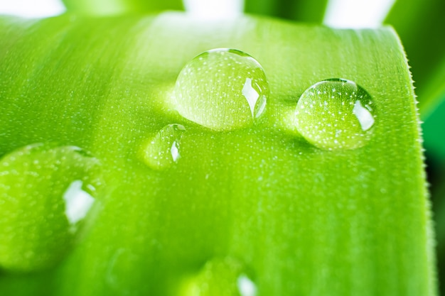 Leaf with a drop of water, macro photo in green shades. the concept of ecology, nature, environment, spring, summer. copyspace.