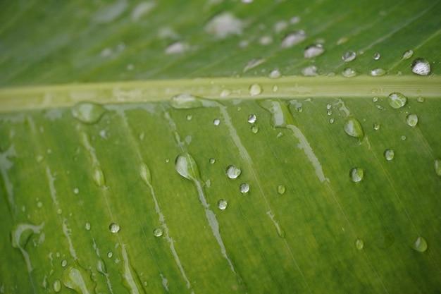물 방울 이미지와 잎