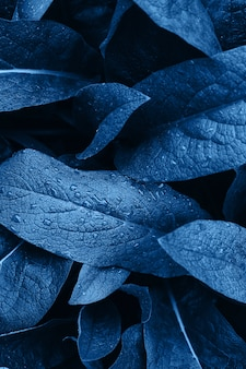 Leaf with water drops. textured abstract blue.