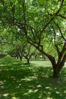 Лиственные невысокие деревья в летнем парке