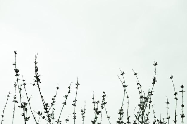 空への樹木の葉なしの枝。葉なしの木、白黒写真