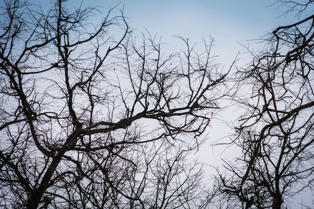 Leafless branches of park winter trees