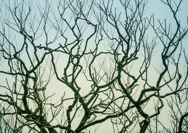Leafless branches of tree against sky
