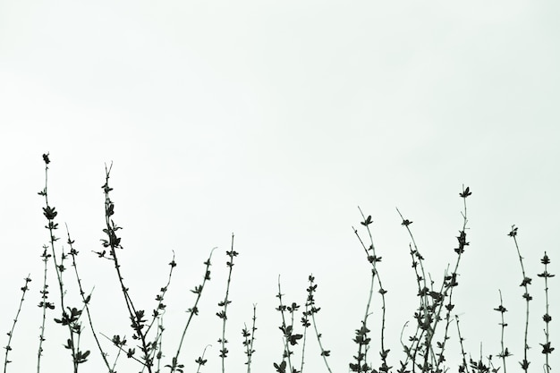 Leafless branches of a treetop against the sky.trees without leaves,black and white picture