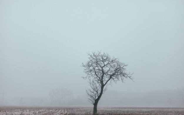 Leafless lonely tree and fog
