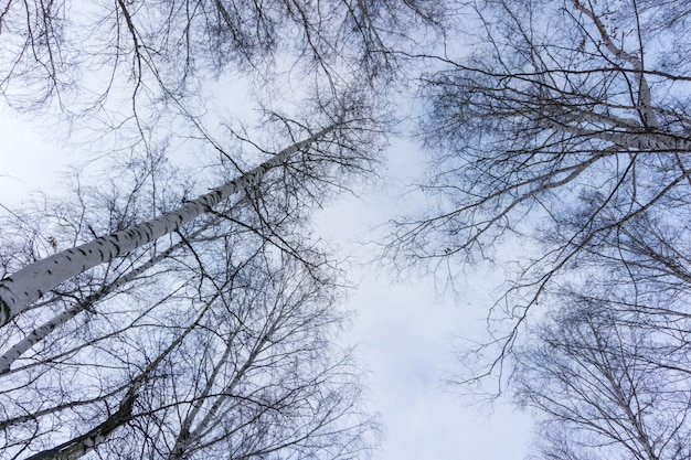 Leafless tree branches on blue sky