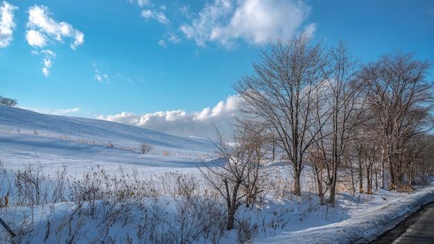 冬の葉のない木