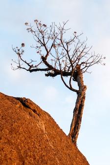 Leafless tree on rock boulder