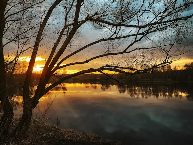 Безлистный силуэт дерева над озером с волшебным закатом на горизонте